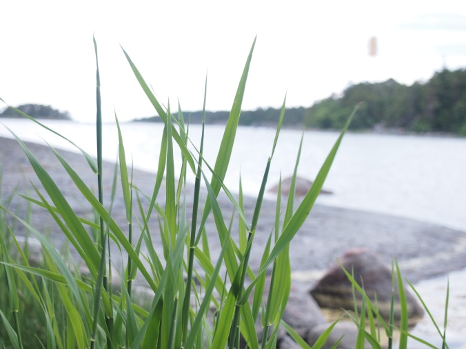 rantaheinikkoa