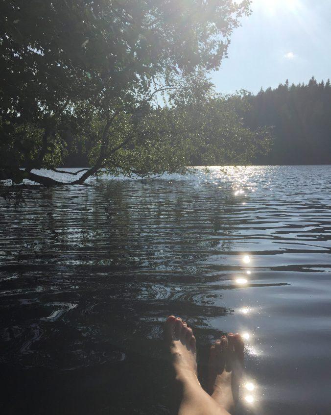 koivu taipuneena veteen
